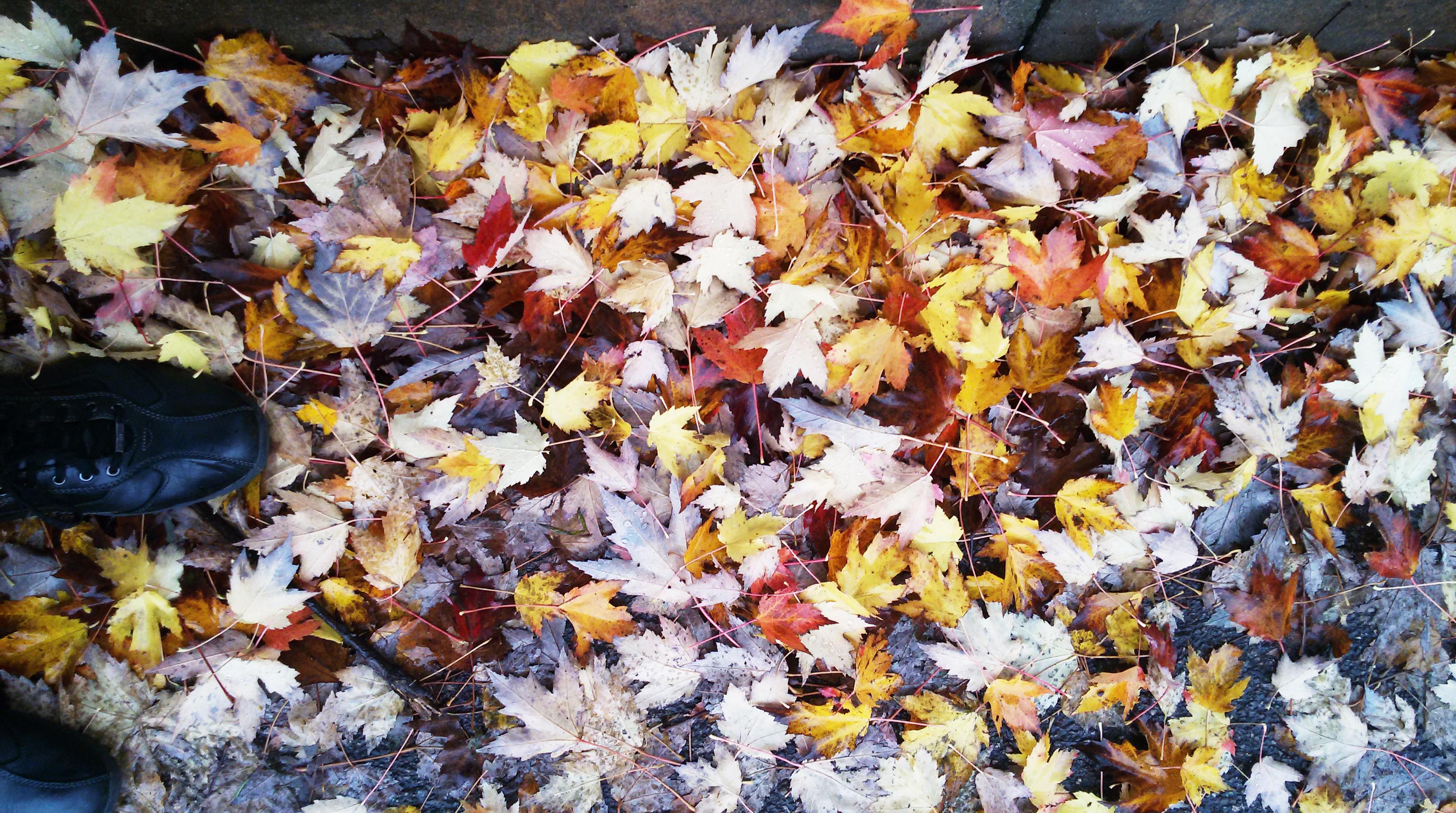 20141106_161817_Foglie colori autunno_MOD